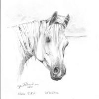 Euma, arabian mare, 21x30 cm, based on the photo made by Ewa Imielska-Hebda